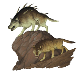 wolf and dire wolf